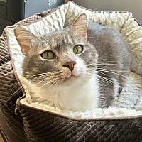 Adopt A Pet :: Tundra - Westchester, CA