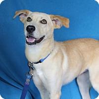 Adopt A Pet :: Sunny - Minneapolis, MN