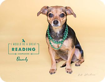 Chihuahua/Miniature Pinscher Mix Dog for adoption in Houston, Texas - Brandy