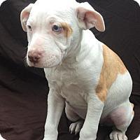 Adopt A Pet :: Gizmo - East Sparta, OH