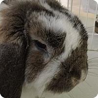 Adopt A Pet :: Bojangles - Moneta, VA