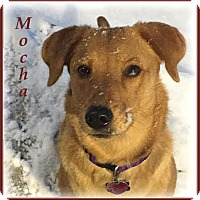 Adopt A Pet :: Mocha (Riley) - Marlborough, MA