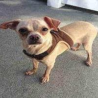 Adopt A Pet :: CONNIE - Alameda, CA