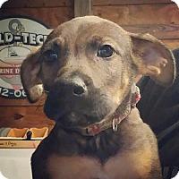 Adopt A Pet :: Oz - Keyport, NJ