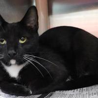 Adopt A Pet :: Precious - Owensboro, KY