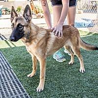 Adopt A Pet :: Rusty - Phoenix, AZ