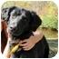 Photo 4 - Setter (Unknown Type) Mix Dog for adoption in Thomaston, Georgia - Smiley