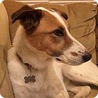 Adopt A Pet :: Jenna - Monrovia, CA