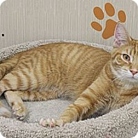 Adopt A Pet :: R J - West Dundee, IL