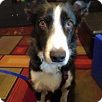Adopt A Pet :: Kelly - Allen, TX