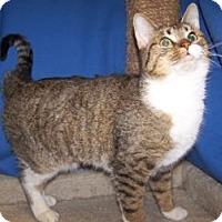 Adopt A Pet :: Nala - Colorado Springs, CO