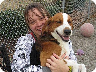 Treeing Walker Coonhound Mix Dog for adoption in Windsor, Virginia - Griffin