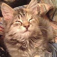 Adopt A Pet :: Abigail - Cumbeland, MD