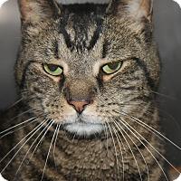 Adopt A Pet :: SWANK - Clayton, NJ