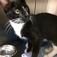 Adopt A Pet :: Buttons - Fremont, OH