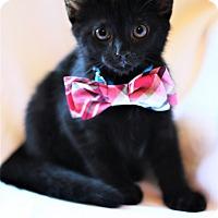 Adopt A Pet :: Batman - Marietta, GA