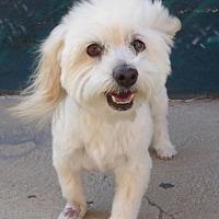 Adopt A Pet :: Fenton BB - Seattle, WA