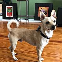 Adopt A Pet :: Buddy in Houston, TX - Houston, TX