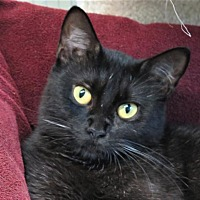 Adopt A Pet :: Caitlin - Gonzales, TX