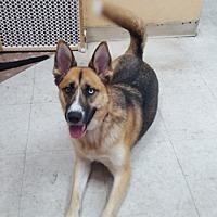 Adopt A Pet :: Andi - Downey, CA