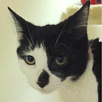 Adopt A Pet :: Dottie - Fairport, NY