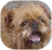 Brussels Griffon Mix Dog for adoption in Hamilton, Ontario - Ryder