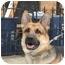 Photo 3 - German Shepherd Dog Dog for adoption in Long Beach, New York - Brutus
