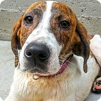 Adopt A Pet :: Rallie*ADOPTED* - Chicago, IL