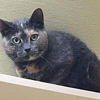 Adopt A Pet :: PUMPKIN (PUNKIE) - Toledo, OH