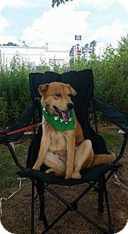 Golden Retriever Mix Dog for adoption in Acworth, Georgia - Friday Amaris