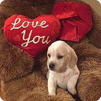Adopt A Pet :: Winston - Hazard, KY