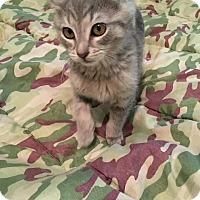Adopt A Pet :: Timmy - Wrightsville, PA