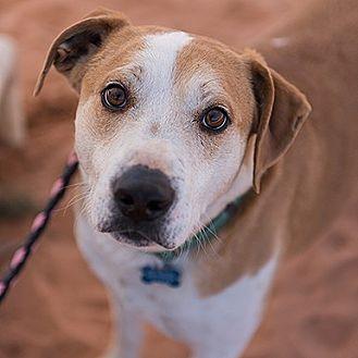 Labrador Retriever Dog for adoption in Kanab, Utah - Robert