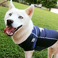Adopt A Pet :: MINA - Christiana, TN