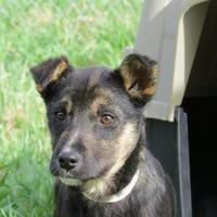Adopt A Pet :: Pella - Athabasca, AB
