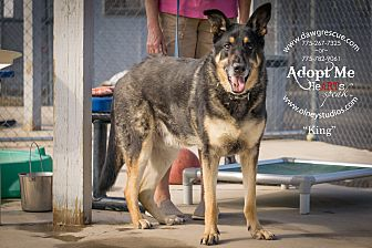 Shepherd (Unknown Type) Mix Dog for adoption in Gardnerville, Nevada - King