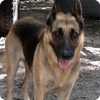 Adopt A Pet :: Sara - Citrus Springs, FL