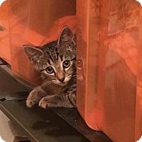 Adopt A Pet :: Bran - Bensalem, PA
