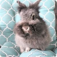 Adopt A Pet :: Mercury - Hillside, NJ