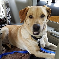 Adopt A Pet :: Sebastian - San Antonio, TX
