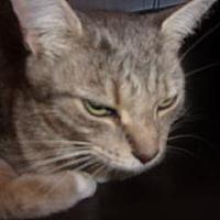 Adopt A Pet :: Deena - Princeton, WV
