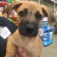 Adopt A Pet :: Washington - Gainesville, FL