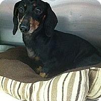 Adopt A Pet :: Ritter - Cantonment, FL