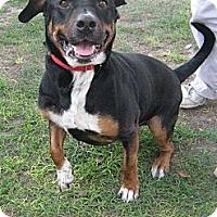 Adopt A Pet :: Chopper - Jacksonville, FL