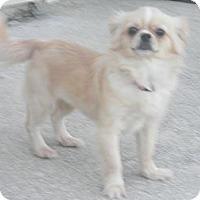 Adopt A Pet :: Samantha - Jacksonville, FL