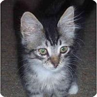 Adopt A Pet :: Edith - Davis, CA