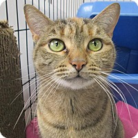 Adopt A Pet :: Sophie - Norwich, NY