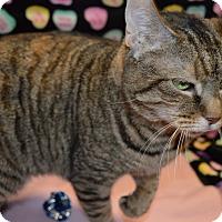 Adopt A Pet :: Yuki - Arlington/Ft Worth, TX