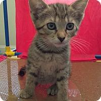 Adopt A Pet :: Erin - Duluth, GA