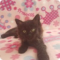 Adopt A Pet :: Juno - Bonsall, CA